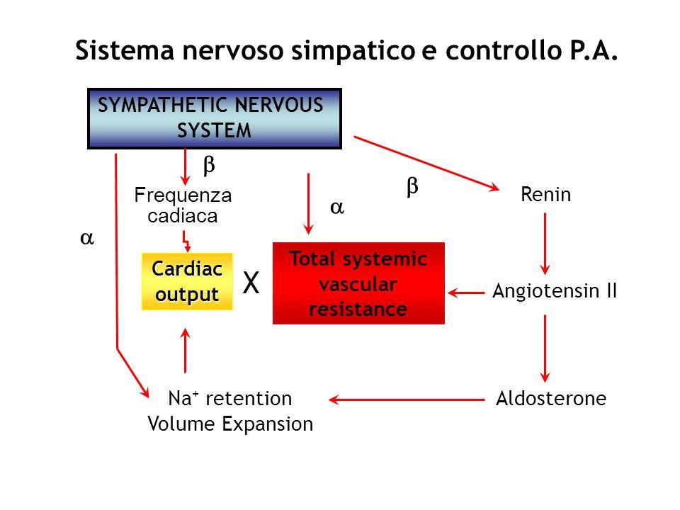SYMPATHETIC NERVOUS SYSTEM Sistema nervoso simpatico e controllo P.A. Renin Angiotensin II AldosteroneNa + retention Volume Expansion Cardiacoutput To