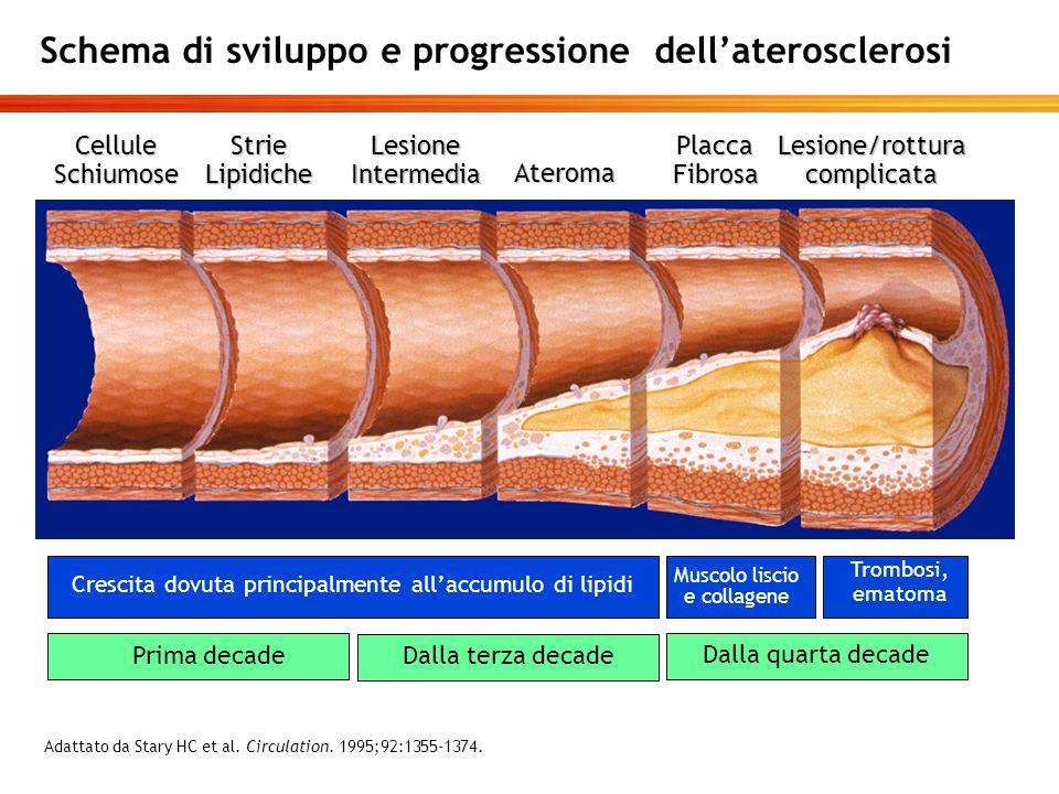 Schema di sviluppo e progressione dellaterosclerosi CelluleSchiumoseStrieLipidicheLesioneIntermedia Ateroma PlaccaFibrosaLesione/rotturacomplicata Mus