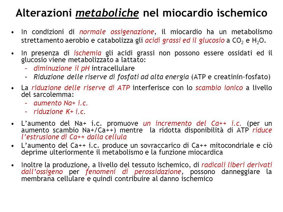 Alterazioni metaboliche nel miocardio ischemico In condizioni di normale ossigenazione, il miocardio ha un metabolismo strettamento aerobio e cataboli