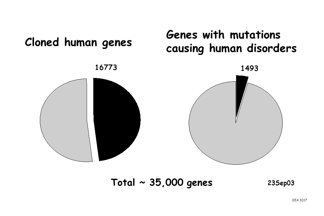 Cloned human genes Genes with mutations causing human disorders Total ~ 35,000 genes SEA 3017 23Sep03 16773 1493