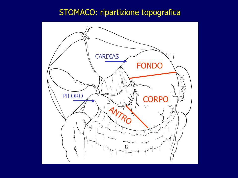 FONDO CORPO ANTRO CARDIAS PILORO STOMACO: ripartizione topografica