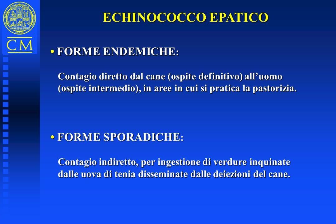 ECHINOCOCCO EPATICO FORME ENDEMICHE : FORME ENDEMICHE : Contagio diretto dal cane (ospite definitivo) alluomo Contagio diretto dal cane (ospite defini