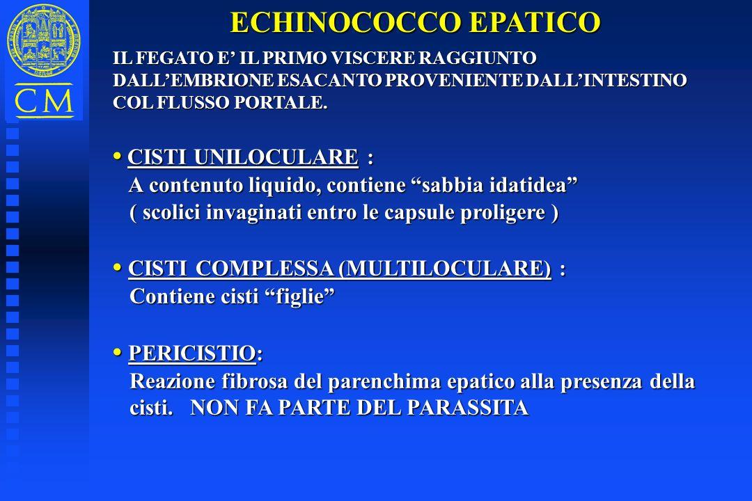 ECHINOCOCCO EPATICO IL FEGATO E IL PRIMO VISCERE RAGGIUNTO DALLEMBRIONE ESACANTO PROVENIENTE DALLINTESTINO COL FLUSSO PORTALE. CISTI UNILOCULARE : CIS