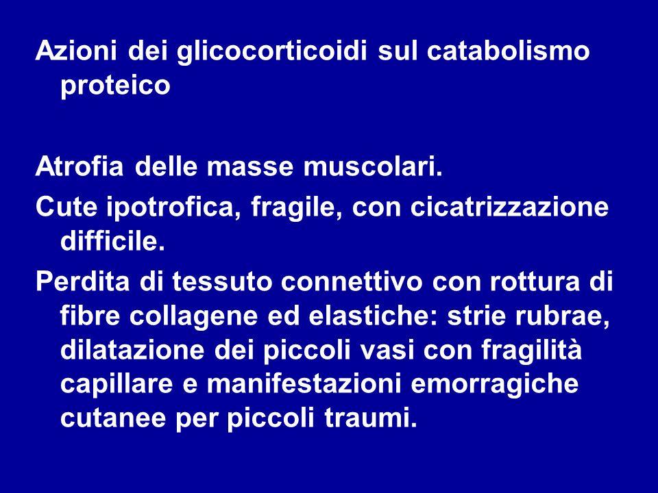 Azioni dei glicocorticoidi sul catabolismo proteico Atrofia delle masse muscolari. Cute ipotrofica, fragile, con cicatrizzazione difficile. Perdita di