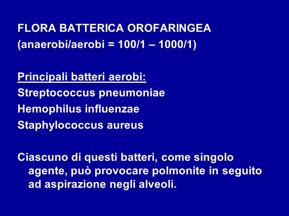 FLORA BATTERICA OROFARINGEA (anaerobi/aerobi = 100/1 – 1000/1) Principali batteri aerobi: Streptococcus pneumoniae Hemophilus influenzae Staphylococcu