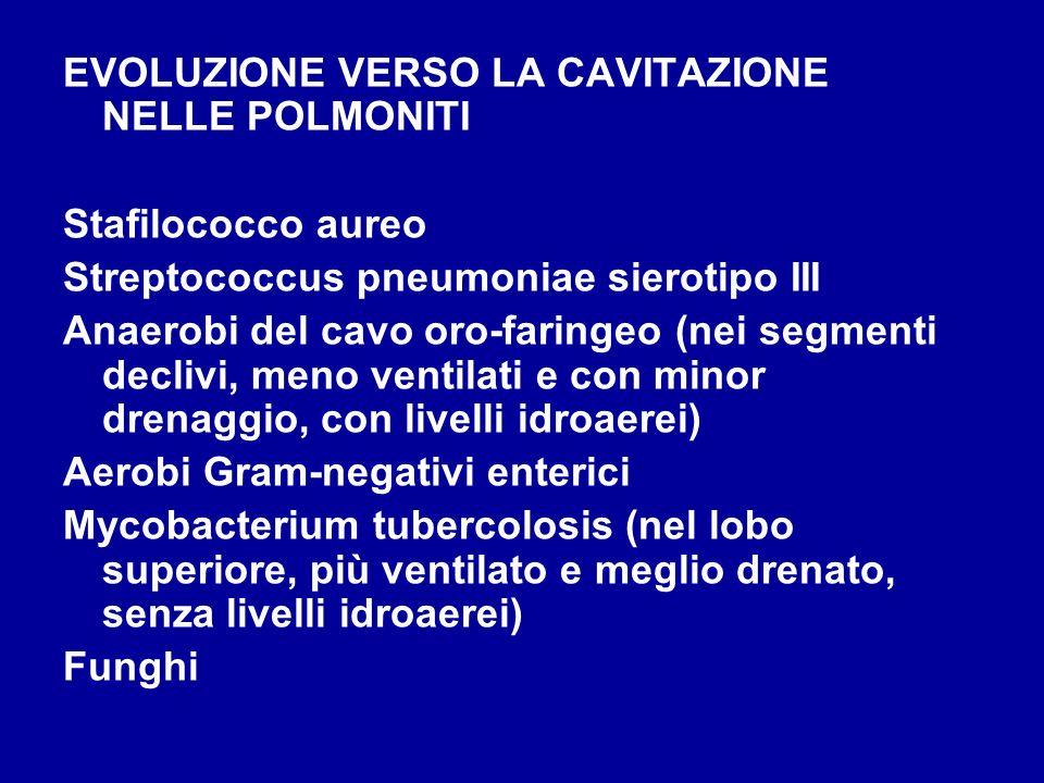 EVOLUZIONE VERSO LA CAVITAZIONE NELLE POLMONITI Stafilococco aureo Streptococcus pneumoniae sierotipo III Anaerobi del cavo oro-faringeo (nei segmenti