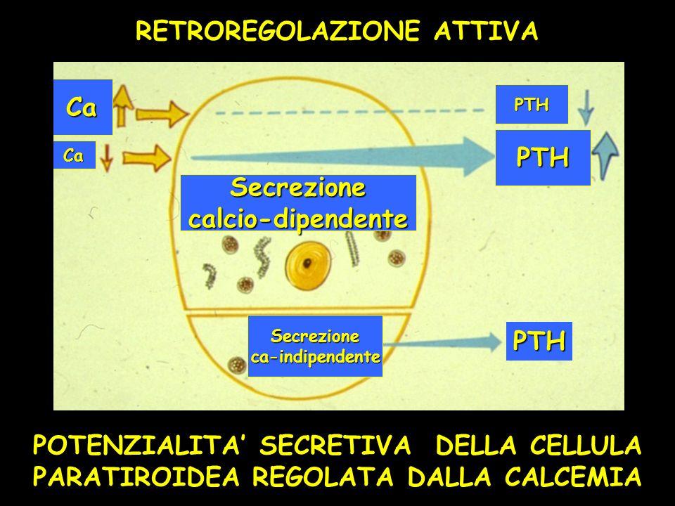 RETROREGOLAZIONE ATTIVA POTENZIALITA SECRETIVA DELLA CELLULA PARATIROIDEA REGOLATA DALLA CALCEMIA Secrezionecalcio-dipendente Secrezioneca-indipendent