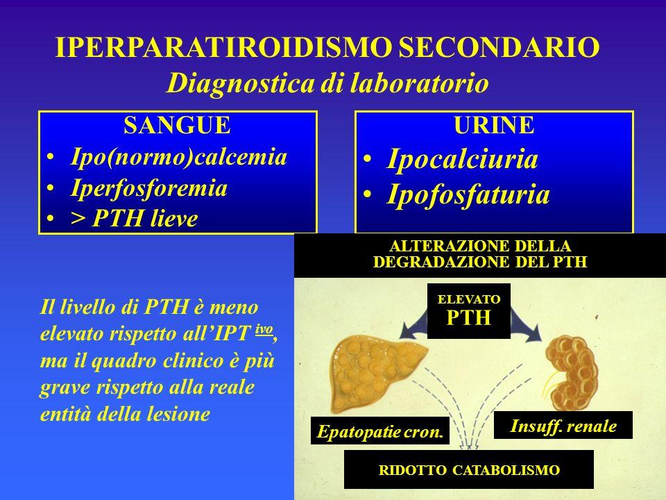 IPERPARATIROIDISMO SECONDARIO Diagnostica di laboratorio SANGUE Ipo(normo)calcemia Iperfosforemia > PTH lieve URINE Ipocalciuria Ipofosfaturia Il live