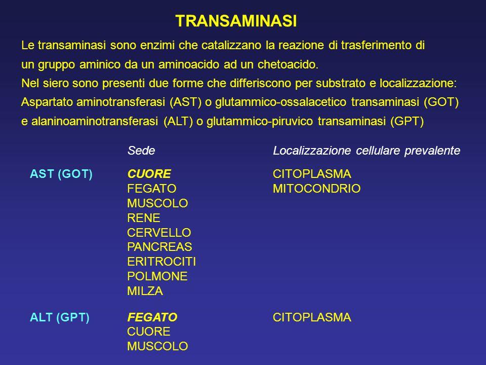 Le transaminasi sono enzimi che catalizzano la reazione di trasferimento di un gruppo aminico da un aminoacido ad un chetoacido. Nel siero sono presen