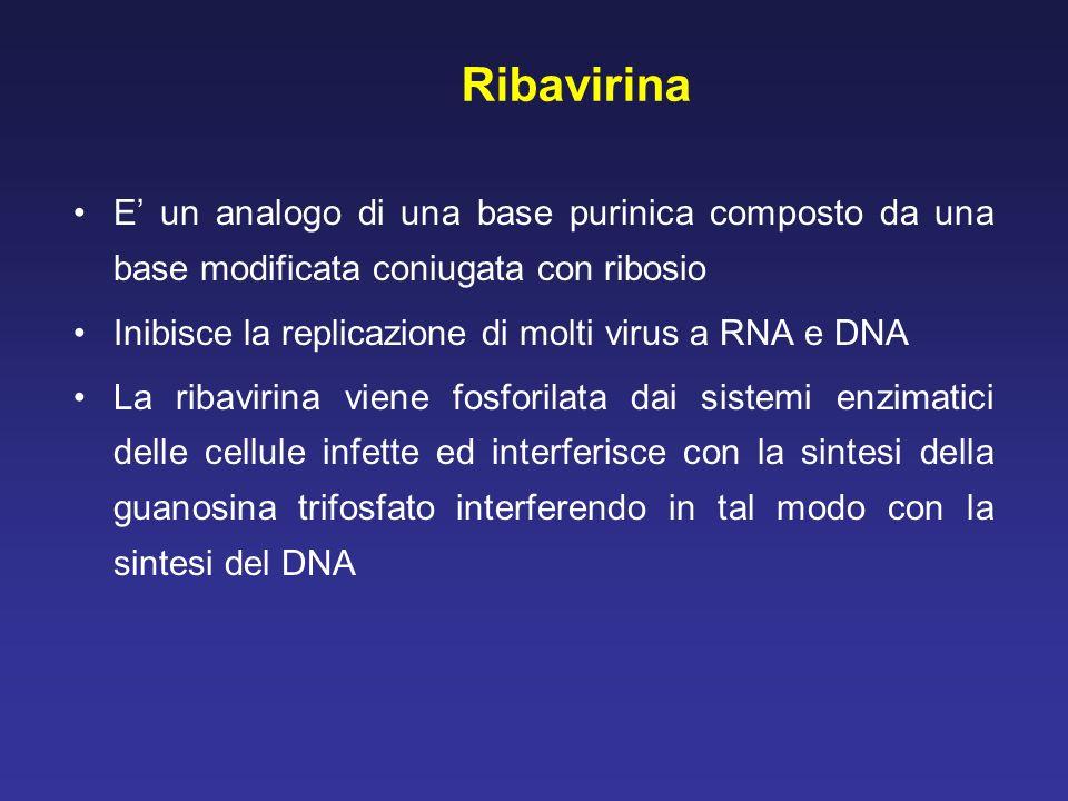 Ribavirina E un analogo di una base purinica composto da una base modificata coniugata con ribosio Inibisce la replicazione di molti virus a RNA e DNA