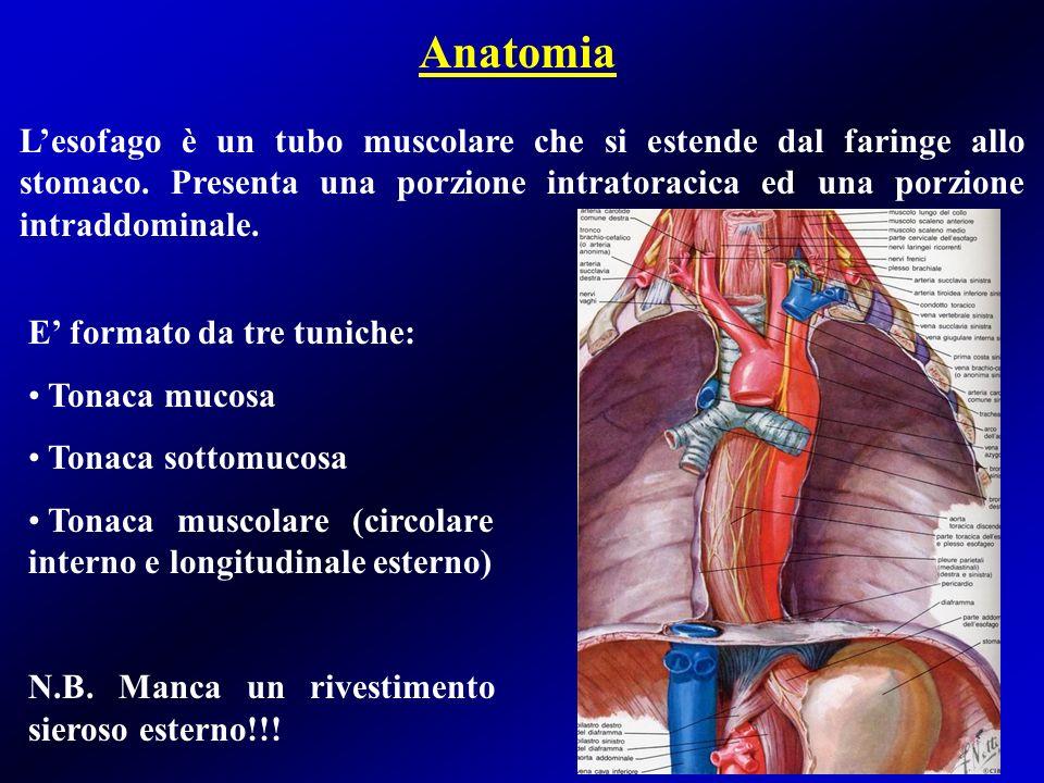 Vascolarizzazione arteriosa La vascolarizzazione dellesofago è scarsa e segmentaria (contrariamente allo stomaco).