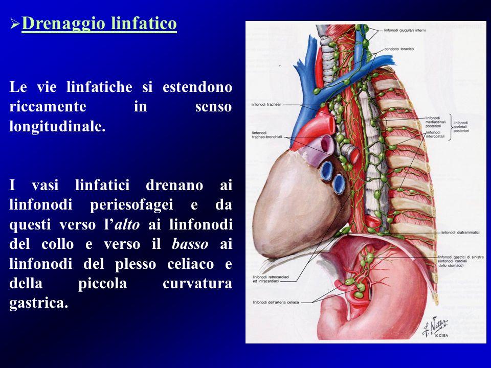Innervazione Linnervazione simpatica e vagale avviene attraverso due reti: intramuscolare e sottomucosa.