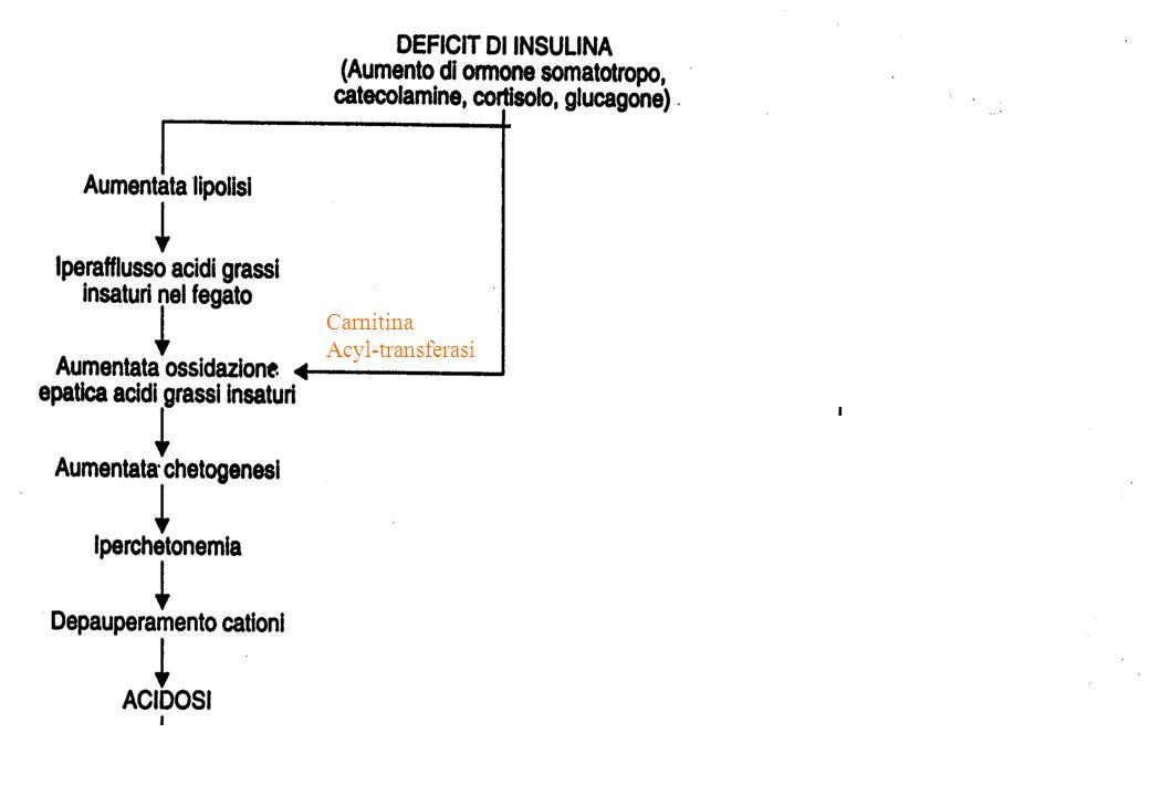 Carnitina Acyl-transferasi
