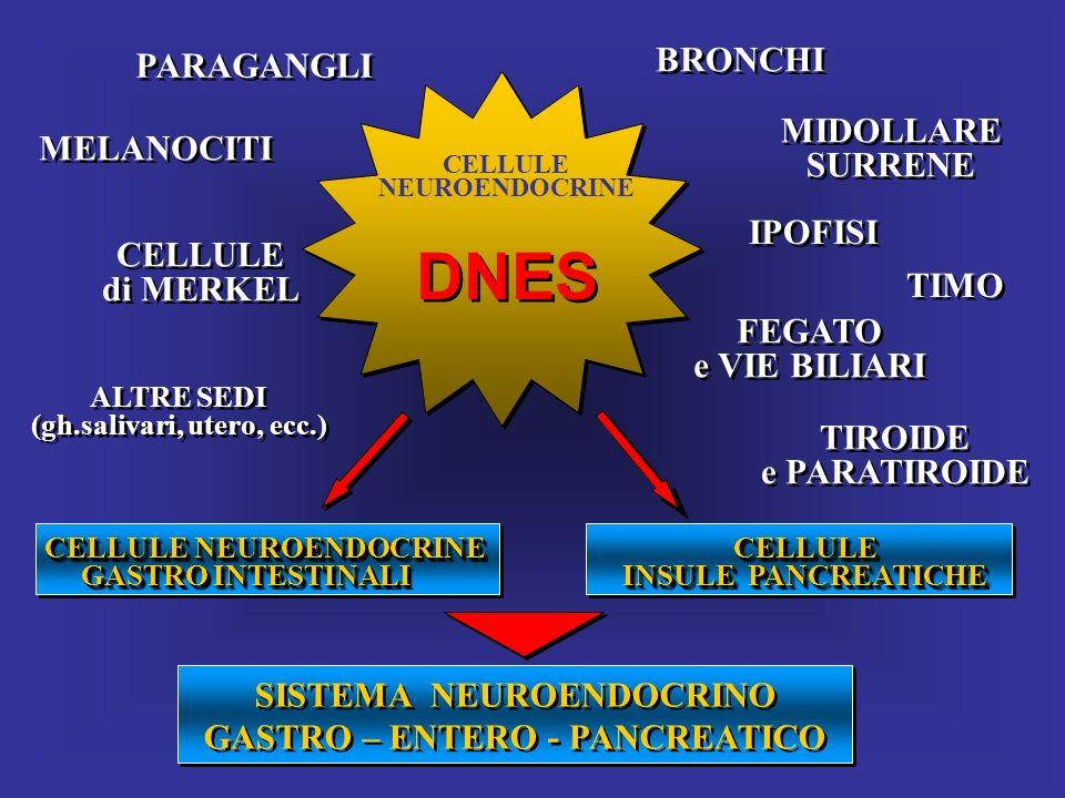 CELLULE NEUROENDOCRINE DNES CELLULE NEUROENDOCRINE CELLULE NEUROENDOCRINE GASTRO INTESTINALI CELLULE NEUROENDOCRINE CELLULE NEUROENDOCRINE GASTRO INTE