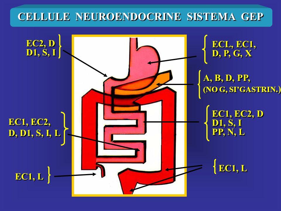 CELLULE NEUROENDOCRINE SISTEMA GEP ECL, EC1, D, P, G, X ECL, EC1, D, P, G, X EC2, D D1, S, I EC2, D D1, S, I EC1, EC2, D D1, S, I PP, N, L EC1, EC2, D