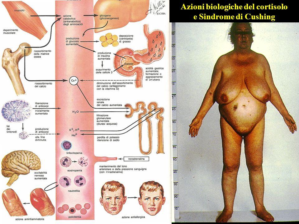 Azioni biologiche del cortisolo e Sindrome di Cushing