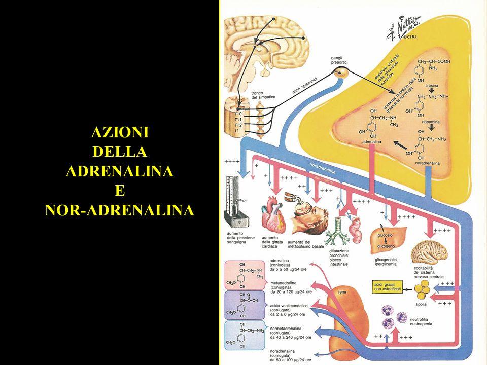 AZIONI DELLA ADRENALINA E NOR-ADRENALINA