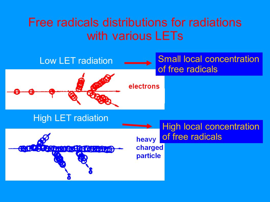 Free radicals distributions for radiations with various LETs Low LET radiation High LET radiation High local concentration of free radicals Small loca