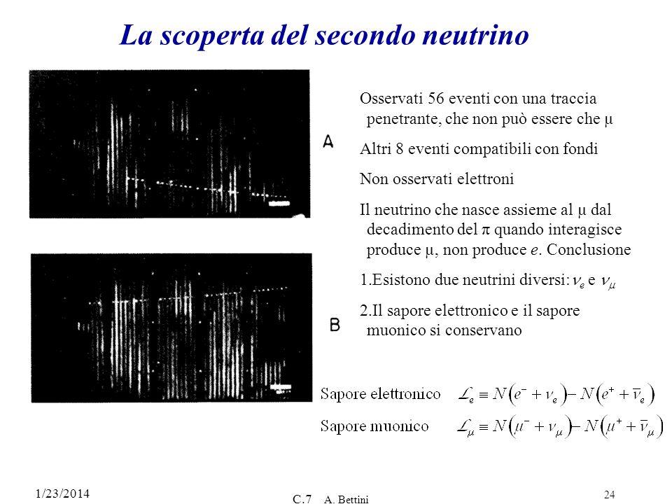 1/23/2014 C.7 A. Bettini 24 La scoperta del secondo neutrino Osservati 56 eventi con una traccia penetrante, che non può essere che µ Altri 8 eventi c