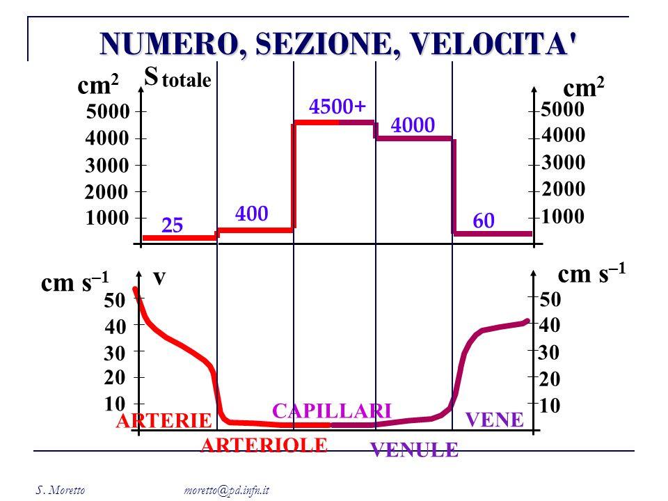S. Moretto moretto@pd.infn.it 5000 4000 3000 2000 1000 S cm 2 5000 4000 3000 2000 1000 cm 2 25 400 4500+ 4000 60 totale 10 20 30 40 50 10 20 30 40 50