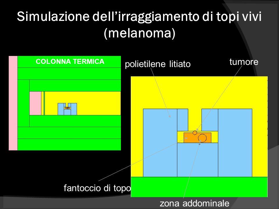 Simulazione dellirraggiamento di topi vivi (melanoma) polietilene litiato fantoccio di topo tumore zona addominale COLONNA TERMICA