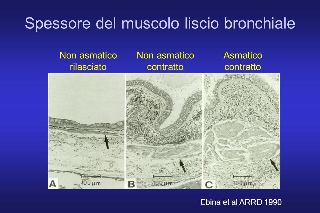 Ebina et al ARRD 1990 Spessore del muscolo liscio bronchiale Non asmatico rilasciato Non asmatico contratto Asmatico contratto
