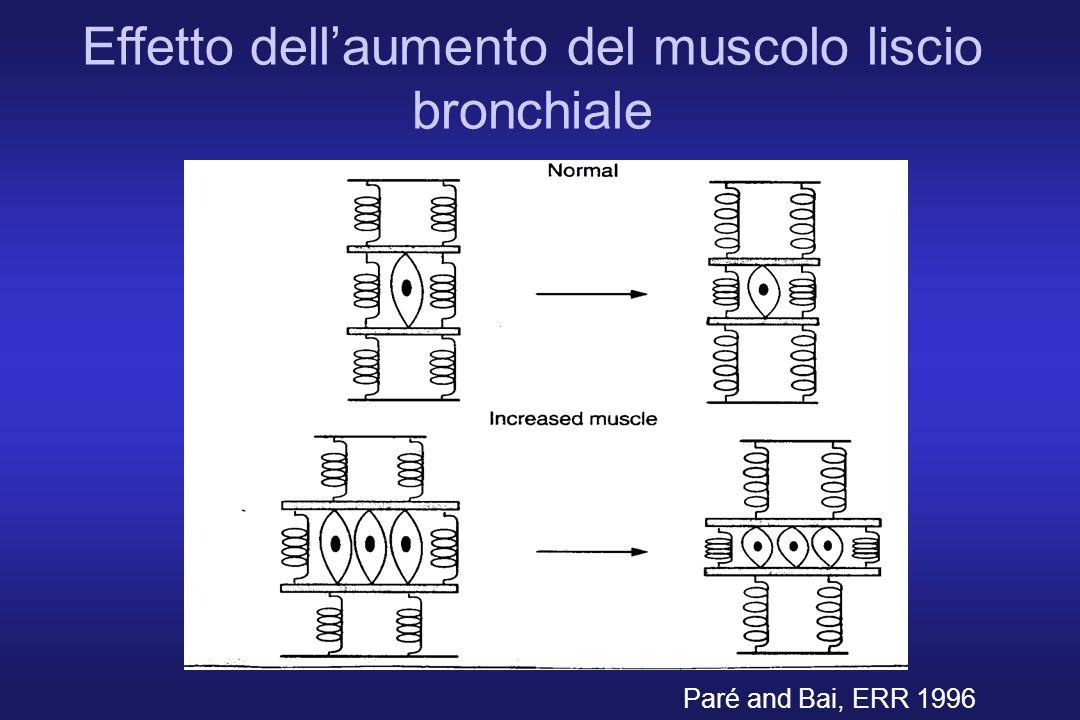 Effetto dellaumento del muscolo liscio bronchiale Paré and Bai, ERR 1996