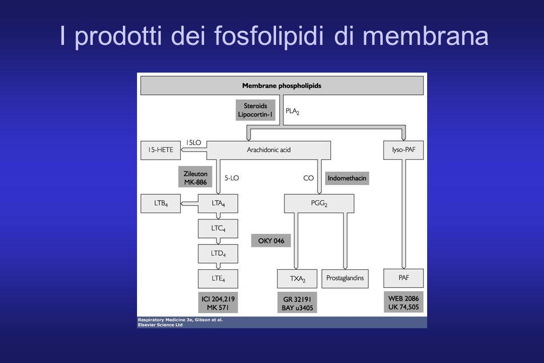 I prodotti dei fosfolipidi di membrana