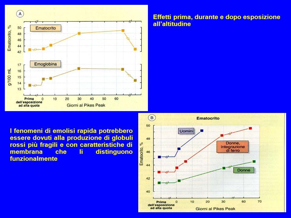 Effetti prima, durante e dopo esposizione allaltitudine I fenomeni di emolisi rapida potrebbero essere dovuti alla produzione di globuli rossi più fra