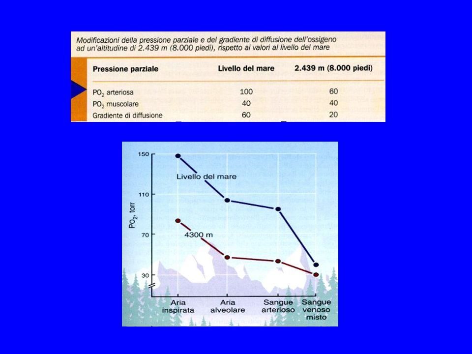 Diminuzione del numero dei mitocondri Diminuzione degli enzimi della via aerobica
