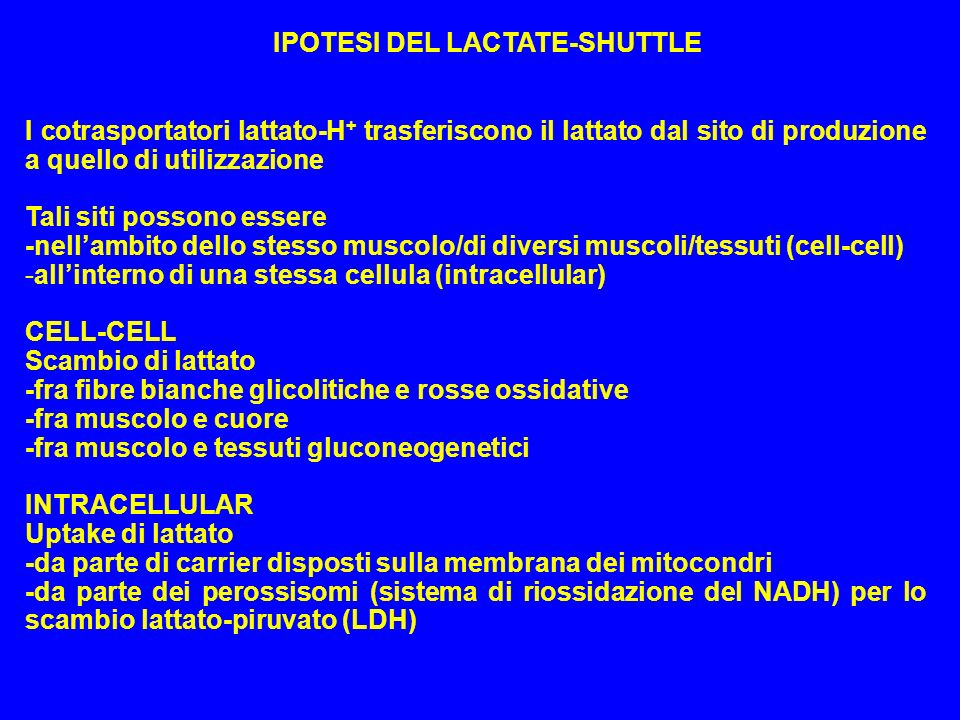 IPOTESI DEL LACTATE-SHUTTLE I cotrasportatori lattato-H + trasferiscono il lattato dal sito di produzione a quello di utilizzazione Tali siti possono