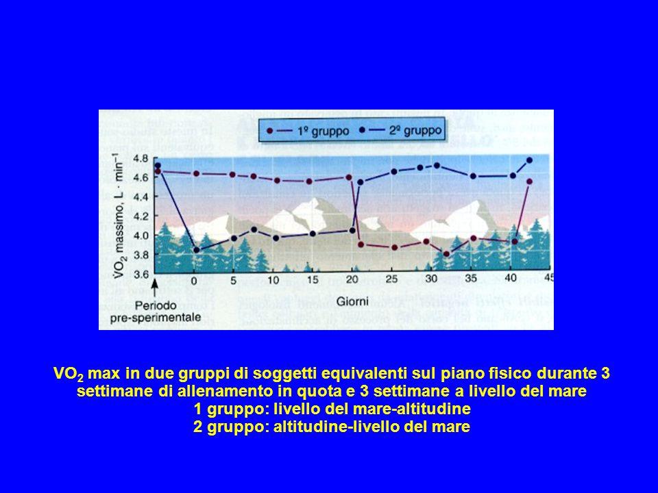 VO 2 max in due gruppi di soggetti equivalenti sul piano fisico durante 3 settimane di allenamento in quota e 3 settimane a livello del mare 1 gruppo: