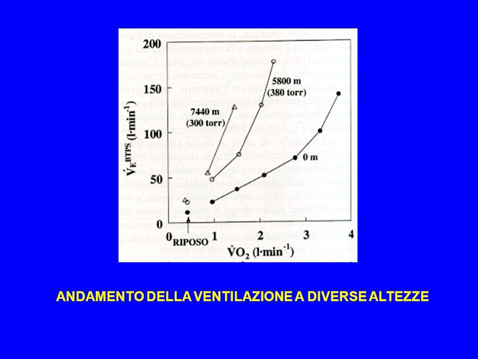 Minore disponibilità di O 2 Alterato funzionamento del muscolo Effetto Dempsey (desaturazione del sangue arterioso)