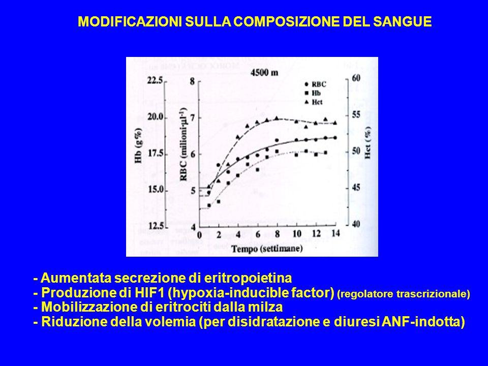- Aumentata secrezione di eritropoietina - Produzione di HIF1 (hypoxia-inducible factor) (regolatore trascrizionale) - Mobilizzazione di eritrociti da