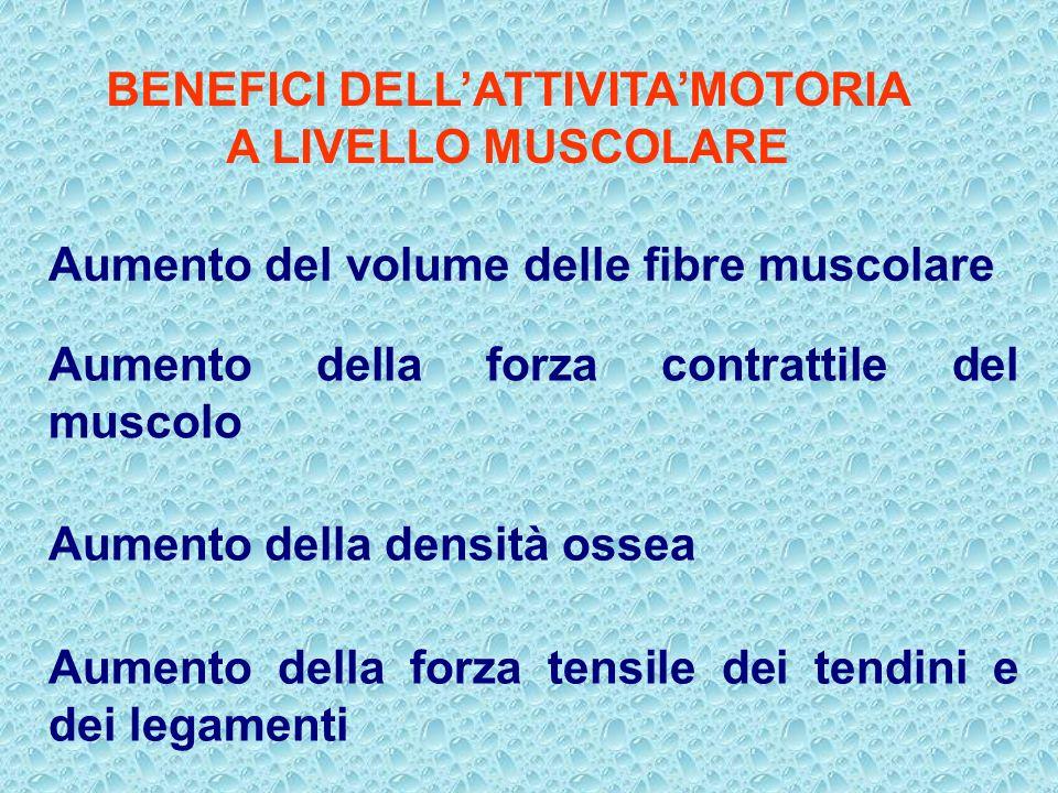 BENEFICI DELLATTIVITAMOTORIA A LIVELLO MUSCOLARE Aumento del volume delle fibre muscolare Aumento della forza contrattile del muscolo Aumento della de