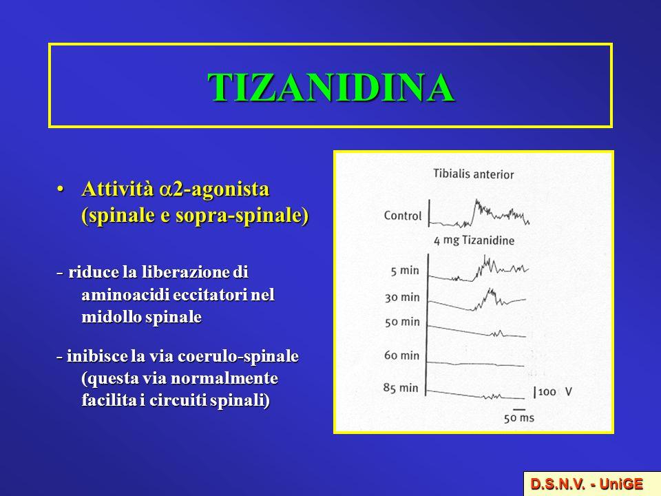 TIZANIDINA Attività 2-agonista (spinale e sopra-spinale)Attività 2-agonista (spinale e sopra-spinale) - riduce la liberazione di aminoacidi eccitatori