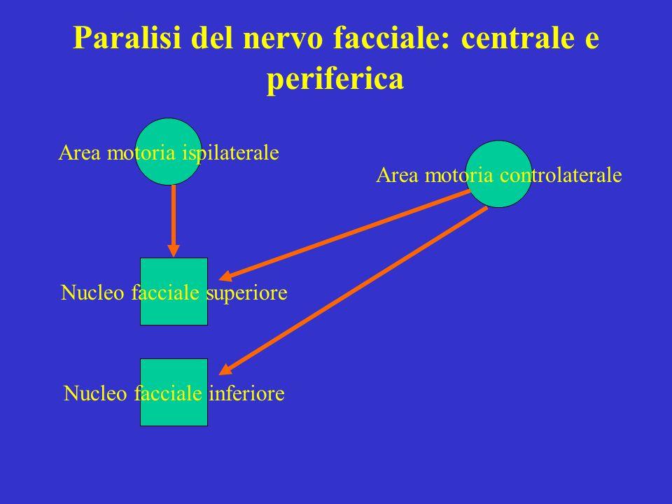 Paralisi del nervo facciale: centrale e periferica Nucleo facciale superiore Nucleo facciale inferiore Area motoria controlaterale Area motoria ispila