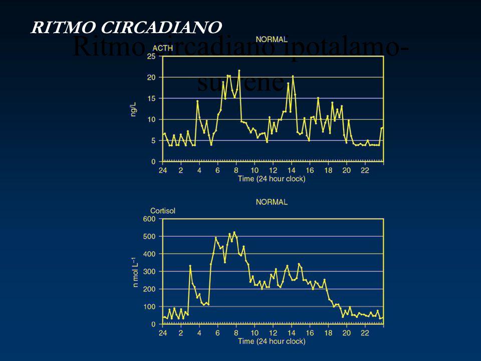 Ritmo circadiano ipotalamo- surrene RITMO CIRCADIANO