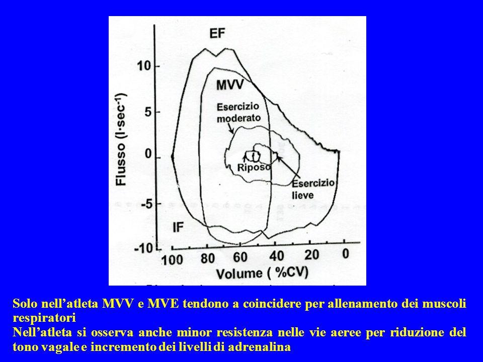 Solo nellatleta MVV e MVE tendono a coincidere per allenamento dei muscoli respiratori Nellatleta si osserva anche minor resistenza nelle vie aeree per riduzione del tono vagale e incremento dei livelli di adrenalina