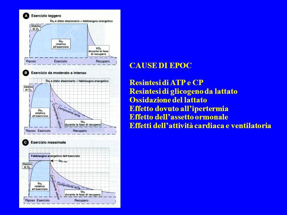 CAUSE DI EPOC Resintesi di ATP e CP Resintesi di glicogeno da lattato Ossidazione del lattato Effetto dovuto allipertermia Effetto dellassetto ormonale Effetti dellattività cardiaca e ventilatoria