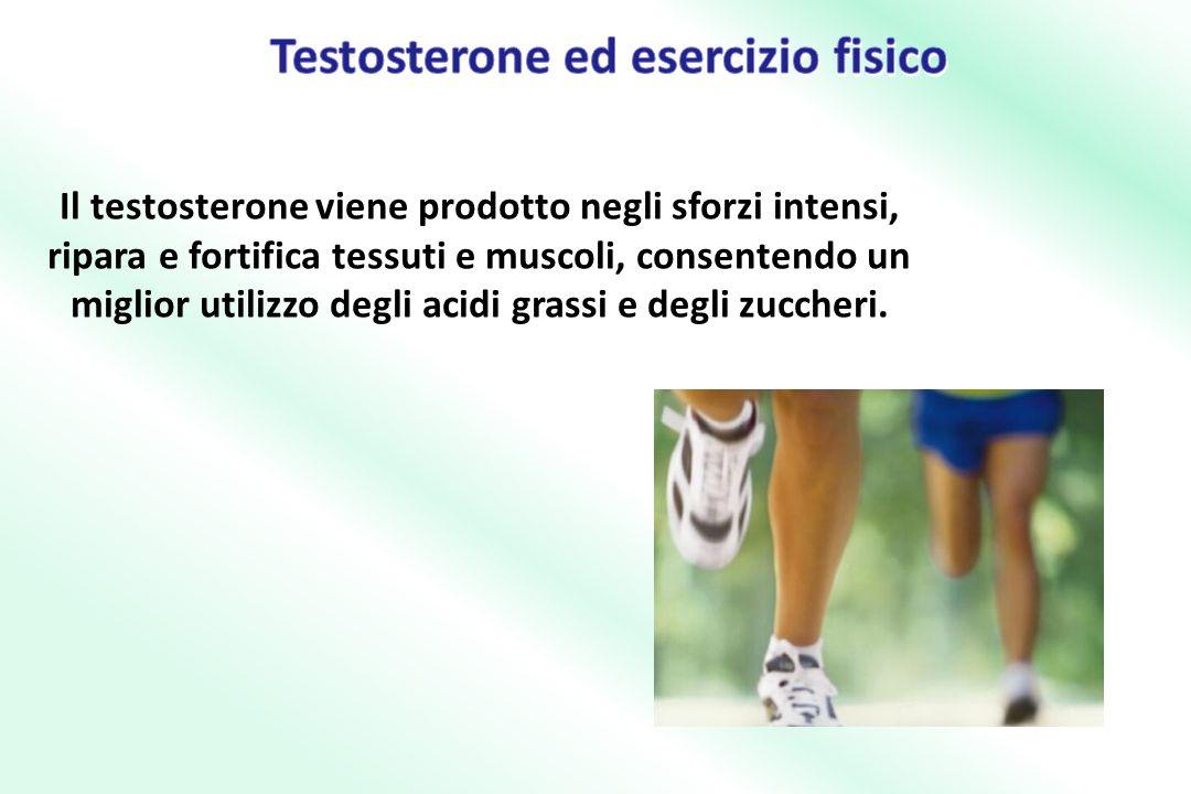 Il testosterone viene prodotto negli sforzi intensi, ripara e fortifica tessuti e muscoli, consentendo un miglior utilizzo degli acidi grassi e degli zuccheri.