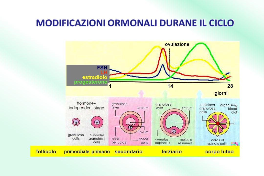 follicolo primordiale primario secondario terziario corpo luteo ovulazione FSH LH estradiolo progesterone 1 14 28 giorni