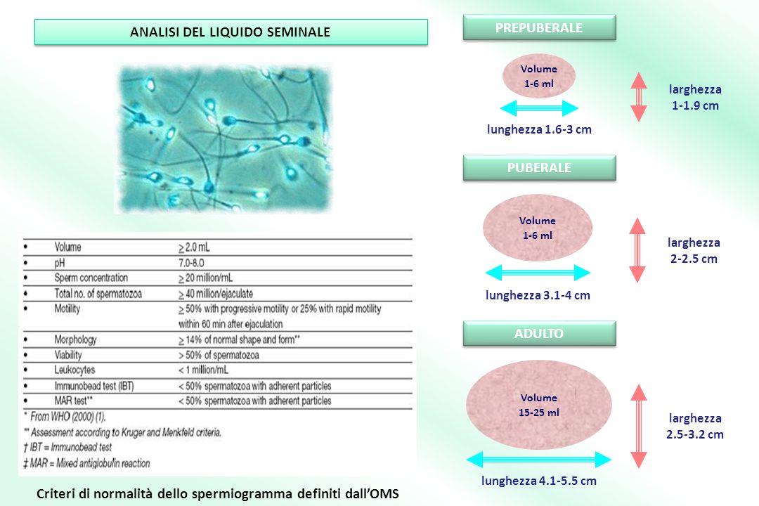 PREPUBERALE PUBERALE ADULTO larghezza 1-1.9 cm lunghezza 1.6-3 cm Volume 1-6 ml larghezza 2-2.5 cm lunghezza 3.1-4 cm Volume 1-6 ml larghezza 2.5-3.2 cm lunghezza 4.1-5.5 cm Volume 15-25 ml Criteri di normalità dello spermiogramma definiti dallOMS ANALISI DEL LIQUIDO SEMINALE