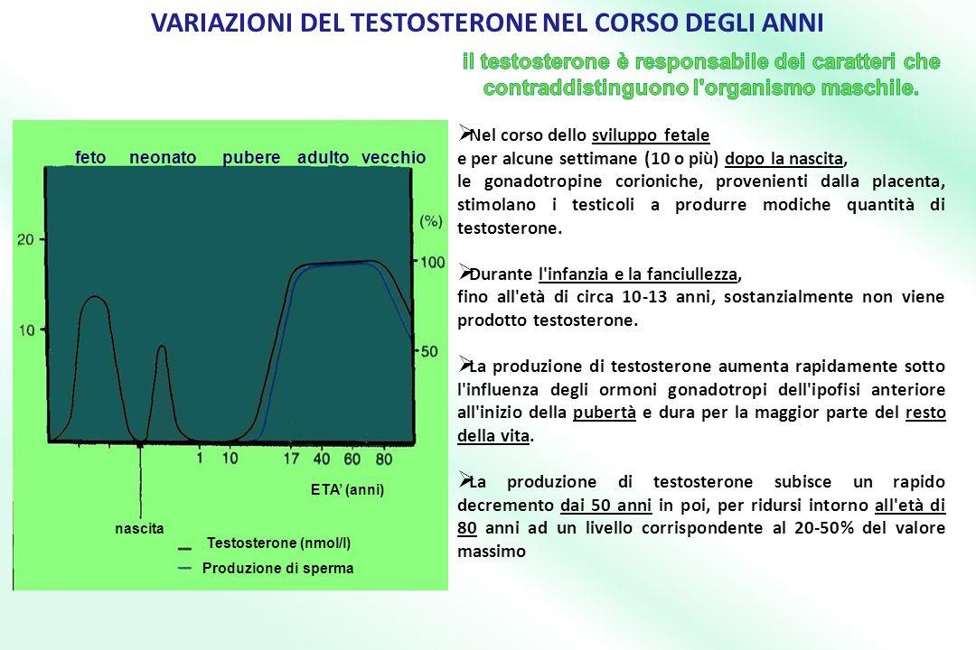 ETA (anni) Testosterone (nmol/l) Produzione di sperma nascita feto neonato pubere adulto vecchio VARIAZIONI DEL TESTOSTERONE NEL CORSO DEGLI ANNI
