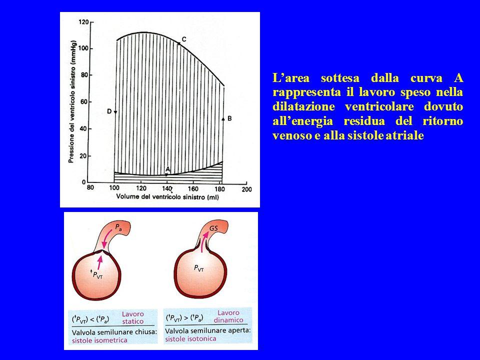 Larea sottesa dalla curva A rappresenta il lavoro speso nella dilatazione ventricolare dovuto allenergia residua del ritorno venoso e alla sistole atr