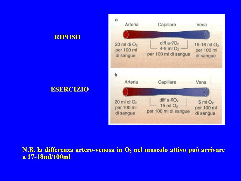 RIPOSO ESERCIZIO N.B. la differenza artero-venosa in O 2 nel muscolo attivo può arrivare a 17-18ml/100ml