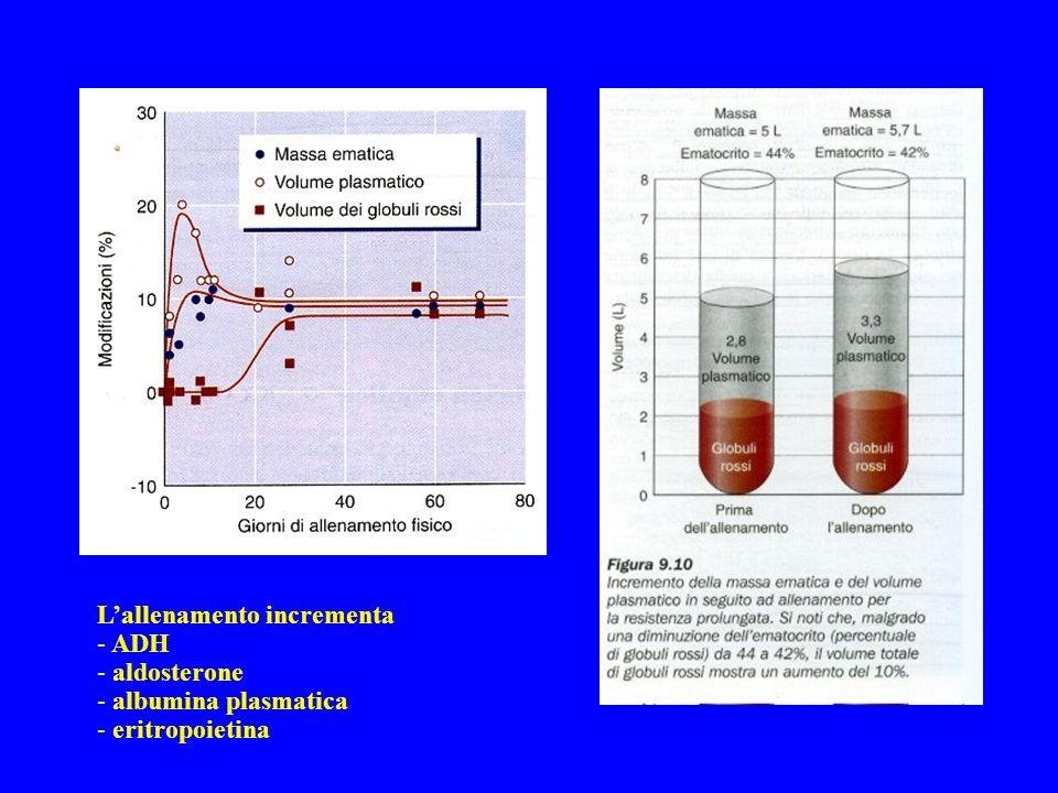 Lallenamento incrementa - ADH - aldosterone - albumina plasmatica - eritropoietina