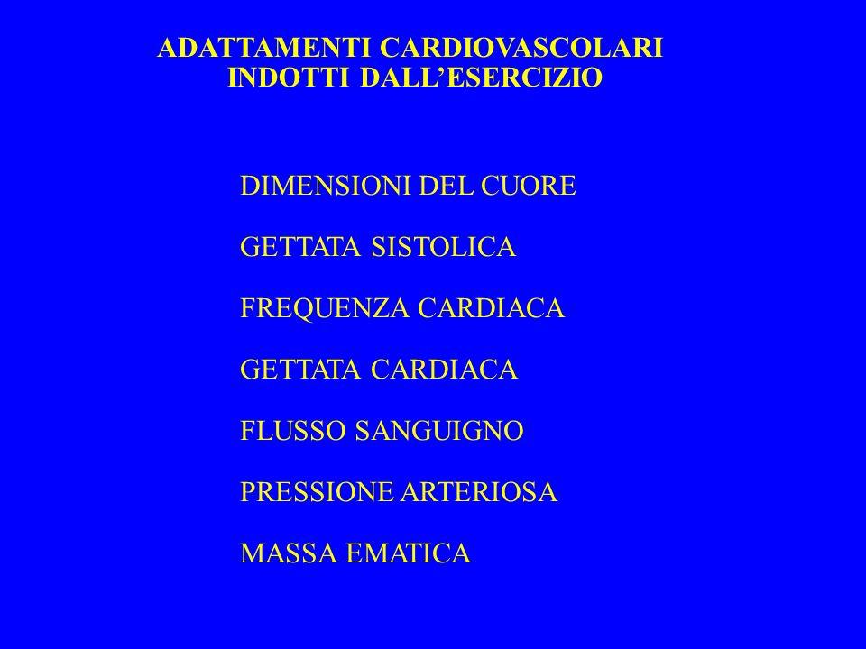 ADATTAMENTI CARDIOVASCOLARI INDOTTI DALLESERCIZIO DIMENSIONI DEL CUORE GETTATA SISTOLICA FREQUENZA CARDIACA GETTATA CARDIACA FLUSSO SANGUIGNO PRESSION
