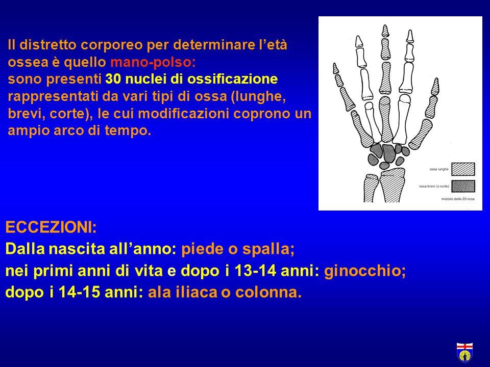 Il distretto corporeo per determinare letà ossea è quello mano-polso: sono presenti 30 nuclei di ossificazione rappresentati da vari tipi di ossa (lunghe, brevi, corte), le cui modificazioni coprono un ampio arco di tempo.