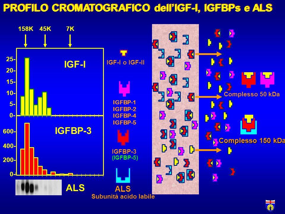 PROFILO CROMATOGRAFICO dellIGF-I, IGFBPs e ALS Complesso 150 kDa IGFBP-3 0- 200- 400- 600- ALS IGF-I 0- 5- 10- 15- 20- 25- 158K45K7K Complesso 50 kDa ALS Subunità acido labile IGF-I o IGF-II IGFBP-3 (IGFBP-5) IGFBP-1 IGFBP-2 IGFBP-4 IGFBP-5